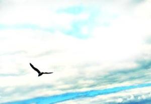 hi_flying_birds_by_water_stone-d5cvnmv