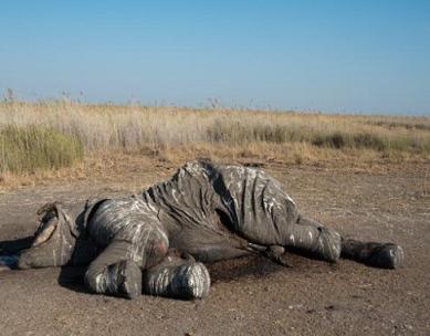 chase-elephant